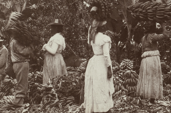 stereograph image